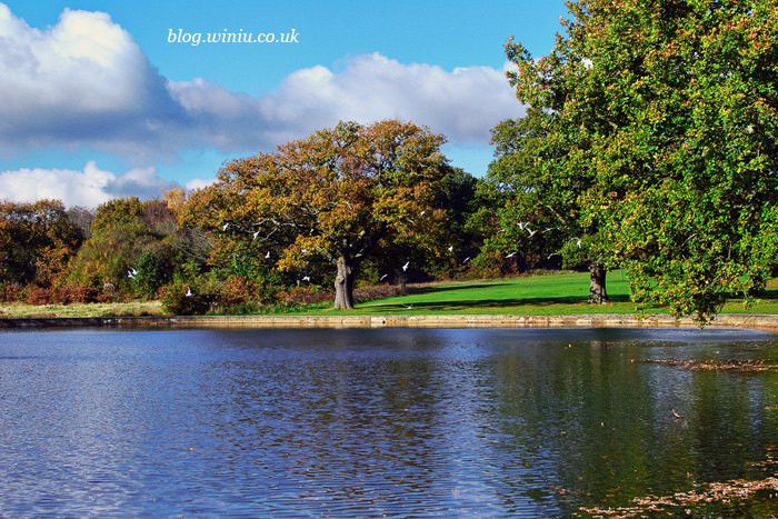 Autumn | Southampton Common | Landscape Photographer
