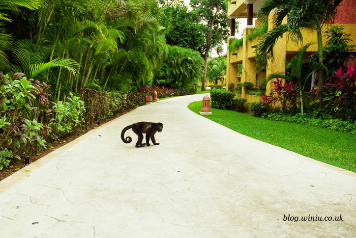 iberostar quetzal and tucan monkey